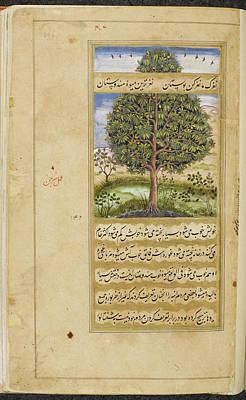 Khan Photograph - Mango Tree by British Library