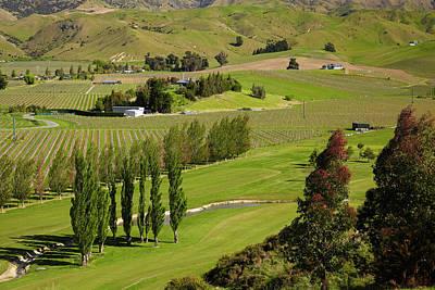 Grapevines Photograph - Marlborough Golf Club, Vineyard by David Wall