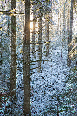 Winter Trees Photograph - May The Long Time Sun Shine Upon You by Kunal Mehra