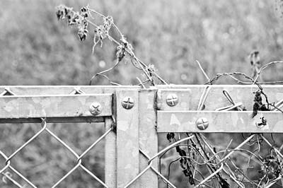 Wire-mesh Photograph - Metal Fence by Tom Gowanlock