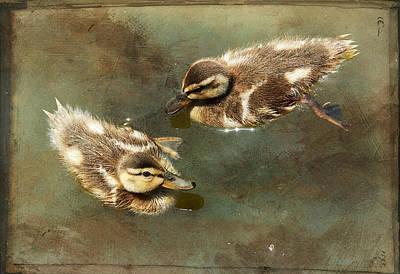 Mini Quackers Print by Fraida Gutovich
