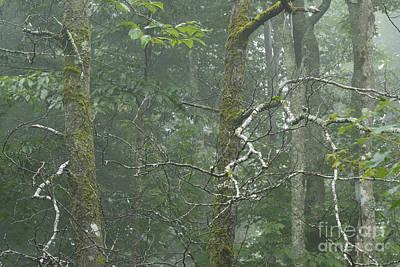 Mist In Cranberry Wilderness Print by Thomas R Fletcher
