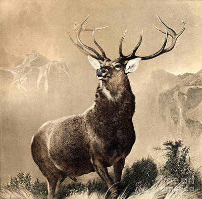 Glen Painting - Monarch Of The Glen by Celestial Images