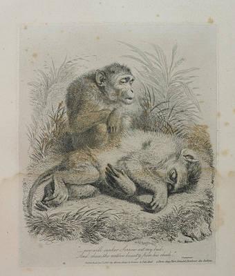 Monkeys Print by British Library