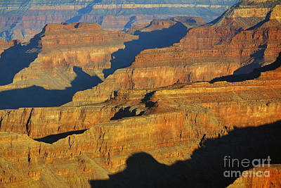 Morning Color And Shadow Play In Grand Canyon National Park Print by Shawn O'Brien