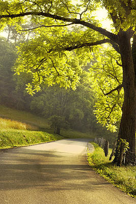 Forest Photograph - Morning Drive by Andrew Soundarajan