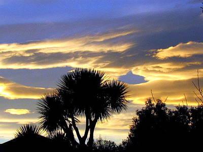 Photograph - Morning Glory by Joyce Woodhouse