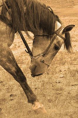 Wyoming Photograph - Movement by Amanda Smith
