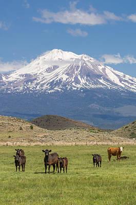 Mt Shasta Cattle Ranch Print by John Trax