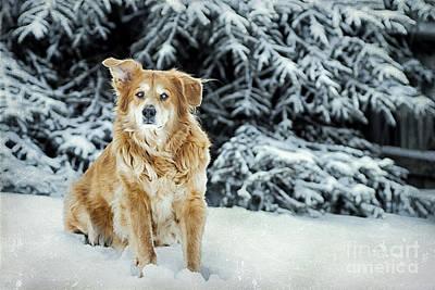 Golden Retriever Photograph - My Girl by Darren Fisher