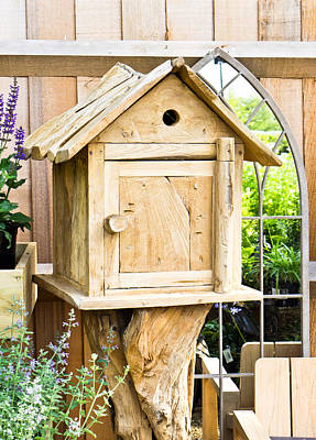 Starlings Photograph - Nesting Box by Tom Gowanlock