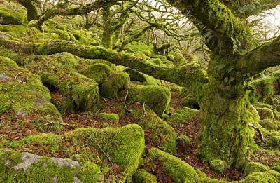 Epiphyte Photograph - Oak Woodland On Dartmoor by Science Photo Library