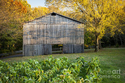 Natchez Trace Parkway Photograph - Old Tobacco Barn by Brian Jannsen