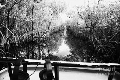 On Board An Airboat Ride Through A Mangrove Jungle In Everglades City Florida Everglades Usa Print by Joe Fox