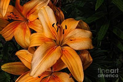 Orange Lilies Original by Lena Auxier
