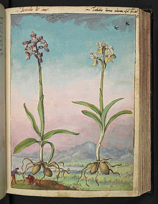 Gathering Photograph - Orchids by British Library