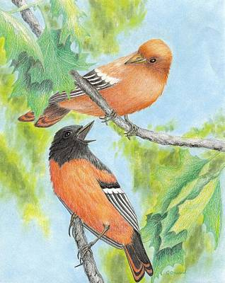 Oriole Painting - Orioles by Cristolin O