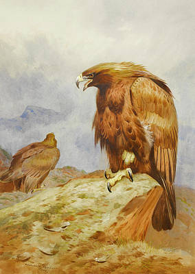 Eagle Painting - Pair Of Golden Eagles by Archibald Thorburn