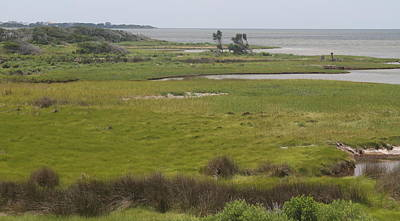Grass Photograph - Pamlico Sound by Cathy Lindsey