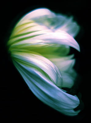 Soft Digital Art - Pastel Petals by Jessica Jenney