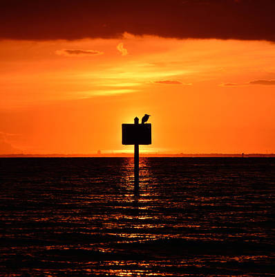 Lone Pelican Photograph - Pelican Sunset by David Lee Thompson