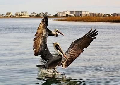 Pelicans Flying Through The Marsh Print by Paulette Thomas