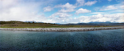 Beagle Photograph - Penguins On The Beagle Channel by Panoramic Images