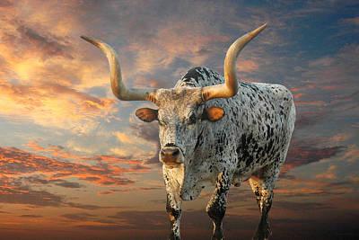 Steer Photograph - Pepper by Robert Anschutz