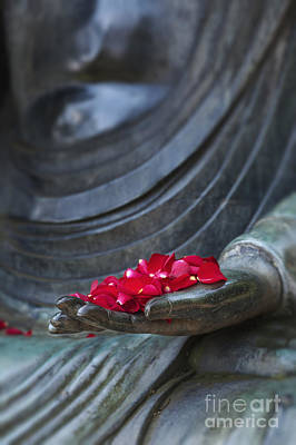 Petals Of Peace  Print by Tim Gainey