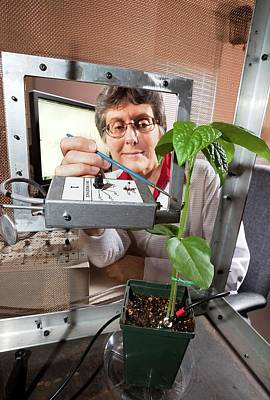 Plant Disease Transmission Research Print by Stephen Ausmus/us Department Of Agriculture