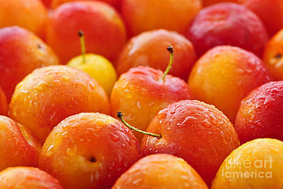 Agriculture Photograph - Plums by Elena Elisseeva
