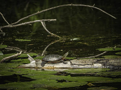 Pond Turtle Photograph - Pond Life by Thomas Young
