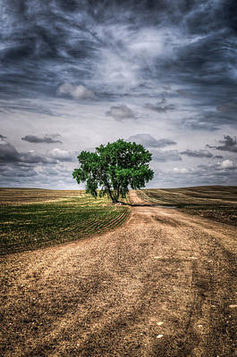 Prairie Tree Print by Brandon Smith