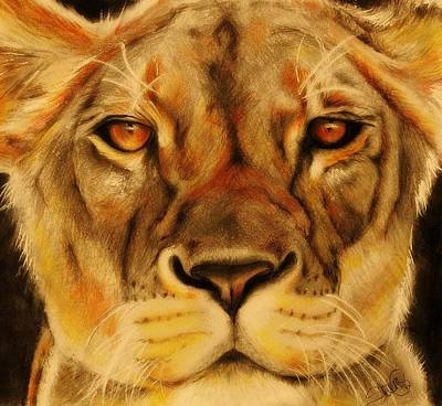 Closeups Drawing - Pride by Sheena Pike