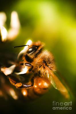 Proboscis Photograph - Process Of Pollination by Jorgo Photography - Wall Art Gallery