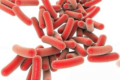 Microorganism Photograph - Pseudomonas Bacteria by Kateryna Kon