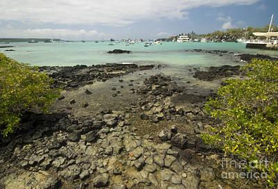 Puerto Ayora Print by William H. Mullins