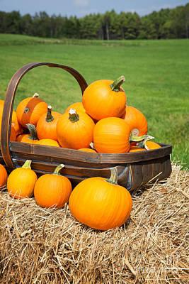 Pumpkins For Sale Print by Jane Rix