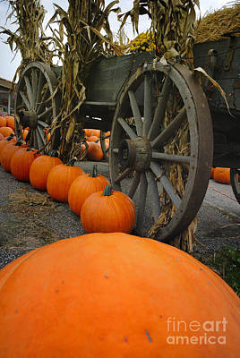 Pumpkins With Old Wagon Print by Amy Cicconi