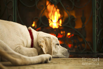 Puppy Sleeping By The Fireplace Print by Diane Diederich