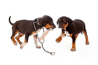 Puppy Veterinarian And Patient Print by Susan  Schmitz