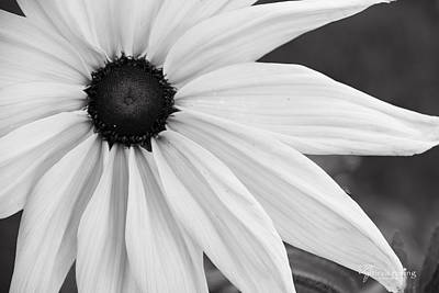 Discernment Photograph - Purity Coneflower, Quincy California by Tirza Roring