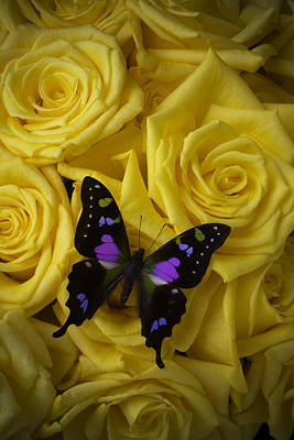 Yellow Butterfly Photograph - Purple Black Butterfly by Garry Gay