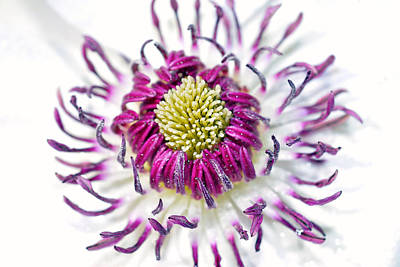 Purple Flower Print by Toppart Sweden