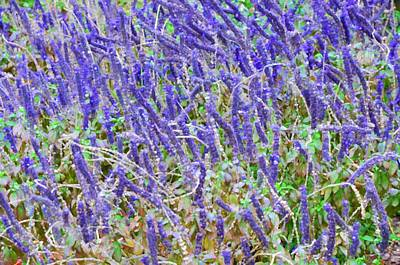 Summer Painting - Purple Wild Flowers 2 by Lanjee Chee