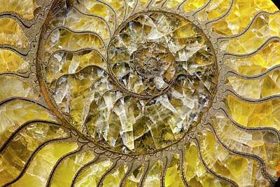 Ammonite Photograph - Pyrites Ammonite Spiral Calcite Crystals by Paul D Stewart