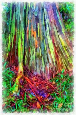 Tree Bark Photograph - Rainbow Trees Of Maui Hawaii by Edward Fielding