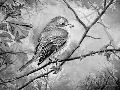Fauna Painting - Red Backed Shrike by Andrew Read