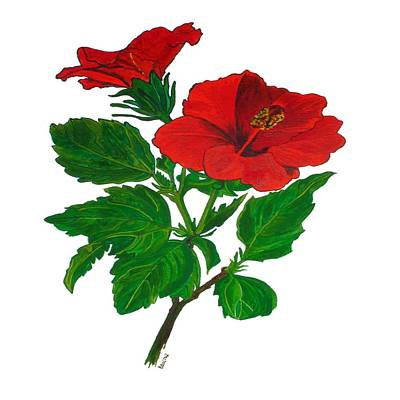 Rose Of Sharon Painting - Red Hibiscus by Tracey Harrington-Simpson