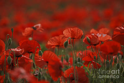 Colored Background Photograph - Red by Nailia Schwarz